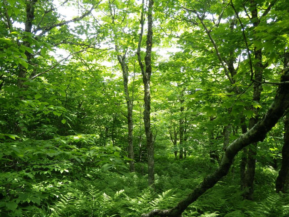 The Acadian forest, outside of Tatamagouche, Nova Scotia
