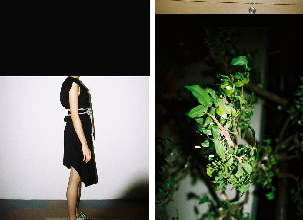 black dress lizard plant copy.jpg