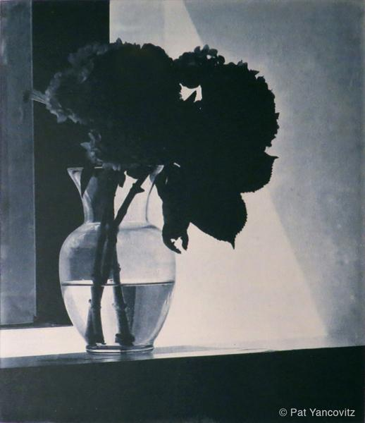 Blue Hydrangeas by Pat Yancovitz
