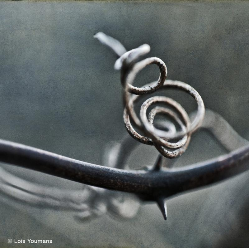 Tendril by Lois Youmans