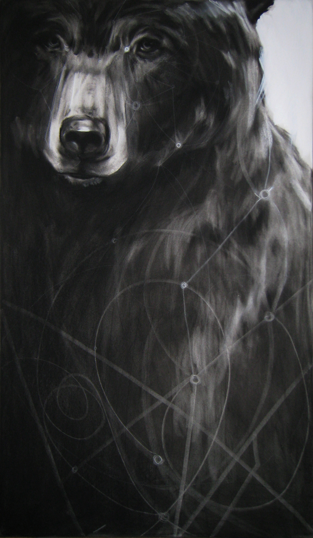 Circuit Bear,  2012  Charcoal and Acrylic on stretched paper  28x48""