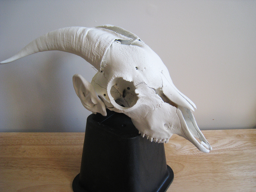 Future Relics (Postworld): Goat,  2013  animal bones and paint  16x12x8""