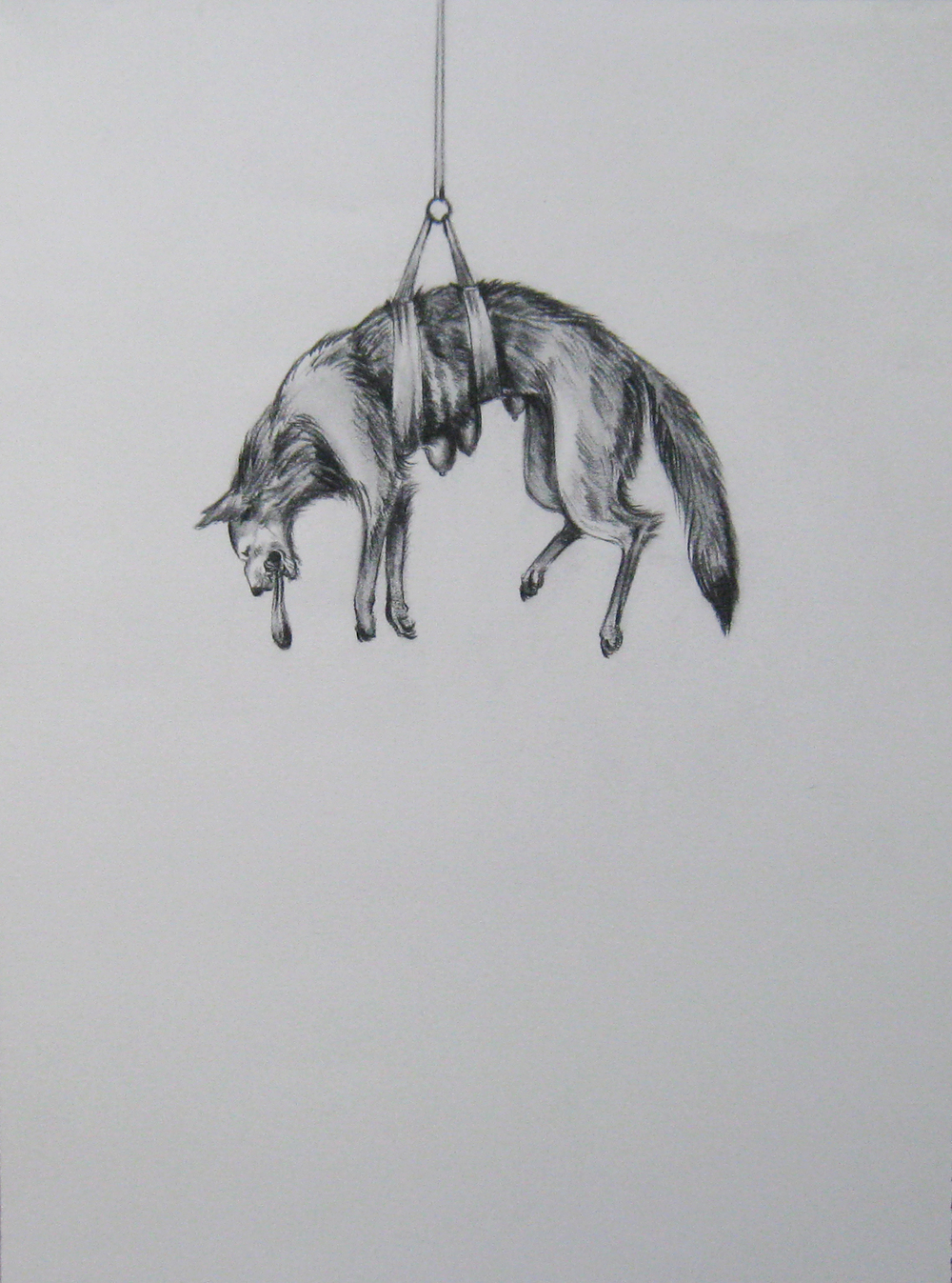 Wolf on a Pulley,  2004  Charcoal on paper  10x14""