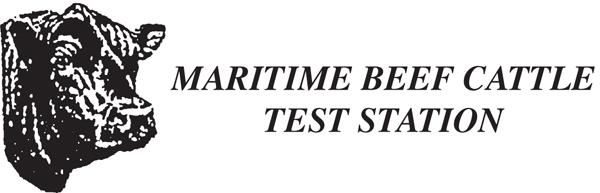 Maritime Beef Cattle Test.jpg