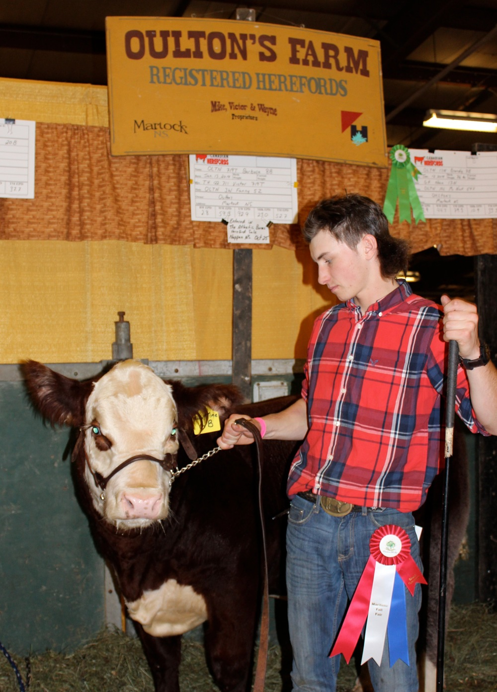 Connor Morse of CDM SImmentals, purebred at the halter of his Supreme Champion Simmental bull.