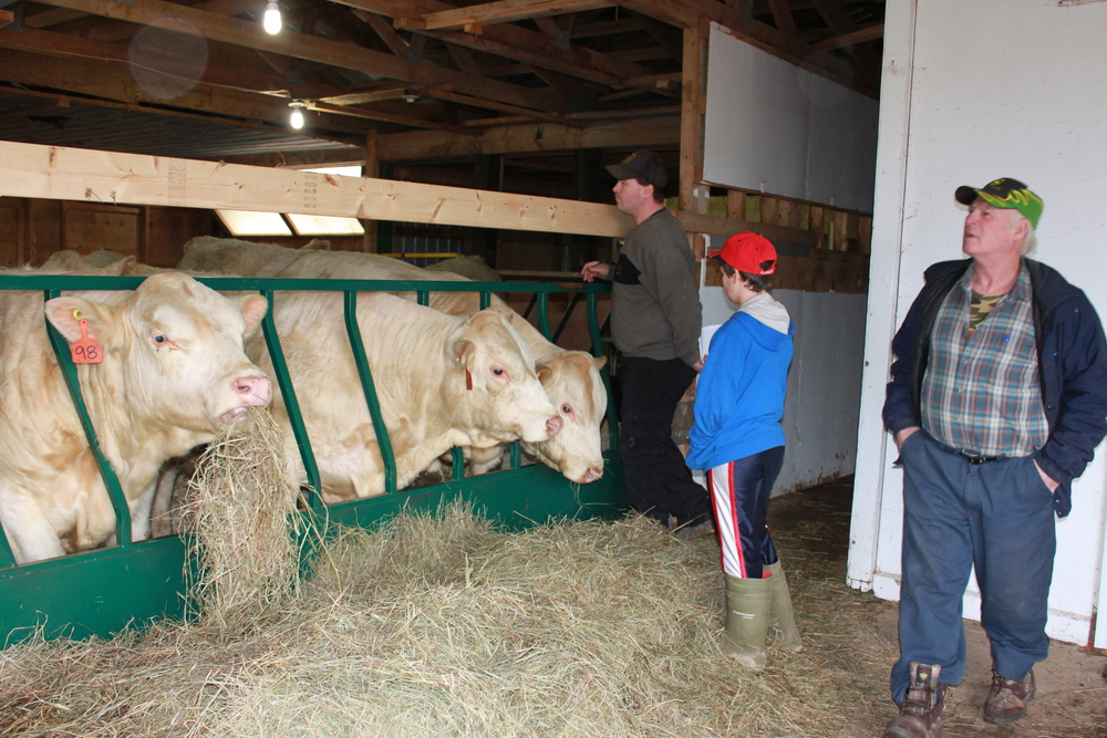 Three generations of the Baxter family—Ules, his father, Walker, and his son, Quinn—who have a commercial herd in Sussex, New Brunswick, look over the Charolais bulls being sold in Nappan. (Heather Jones photo)