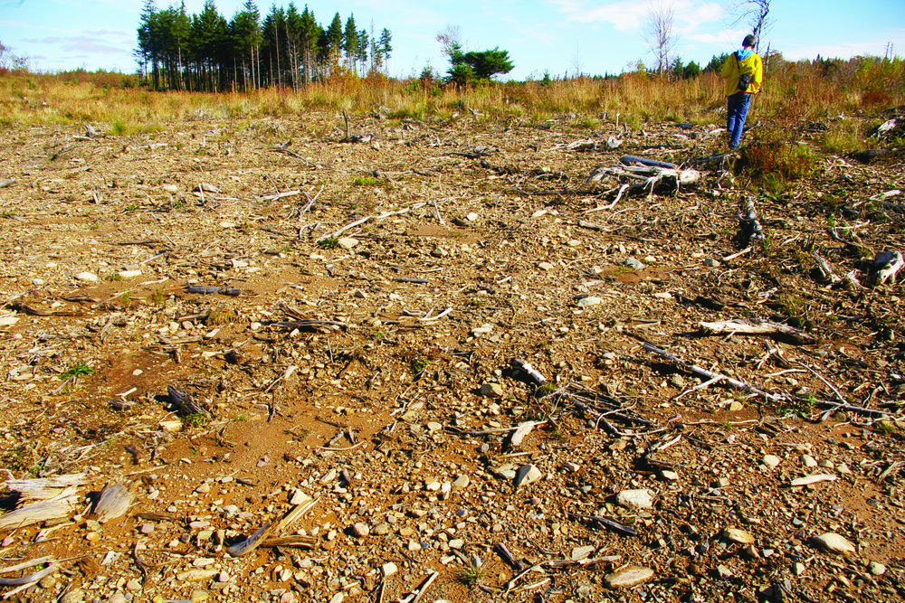 A site at Caribou Mines, south of Middle Musquodoboit, N.S., three years after whole-tree clearcut harvesting took place. The practice remains unregulated in Nova Scotia, and little information has been made publicly available about the potential for diminished productivity on sites prone to soil nutrient loss. (Jamie Simpson photo)