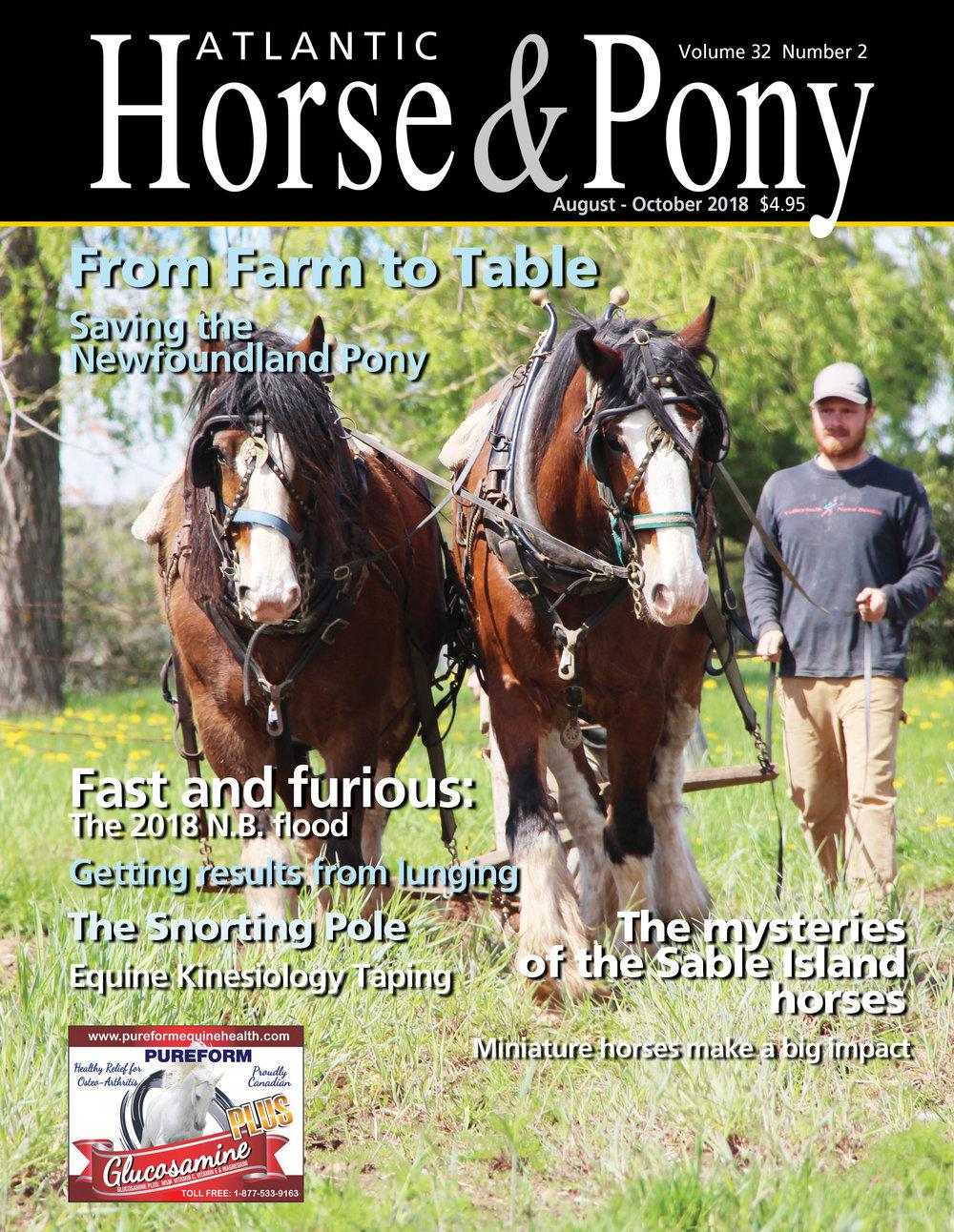HorsePonyAugOct2018.jpg