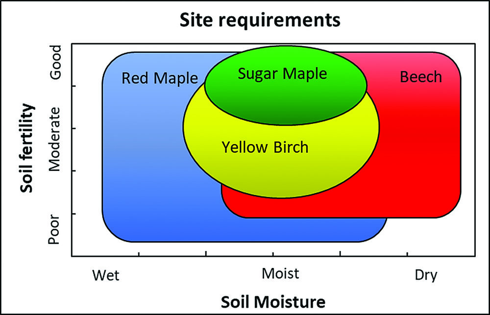 Site requirements for key hardwood species (adapted from Lee Allen, 2013)