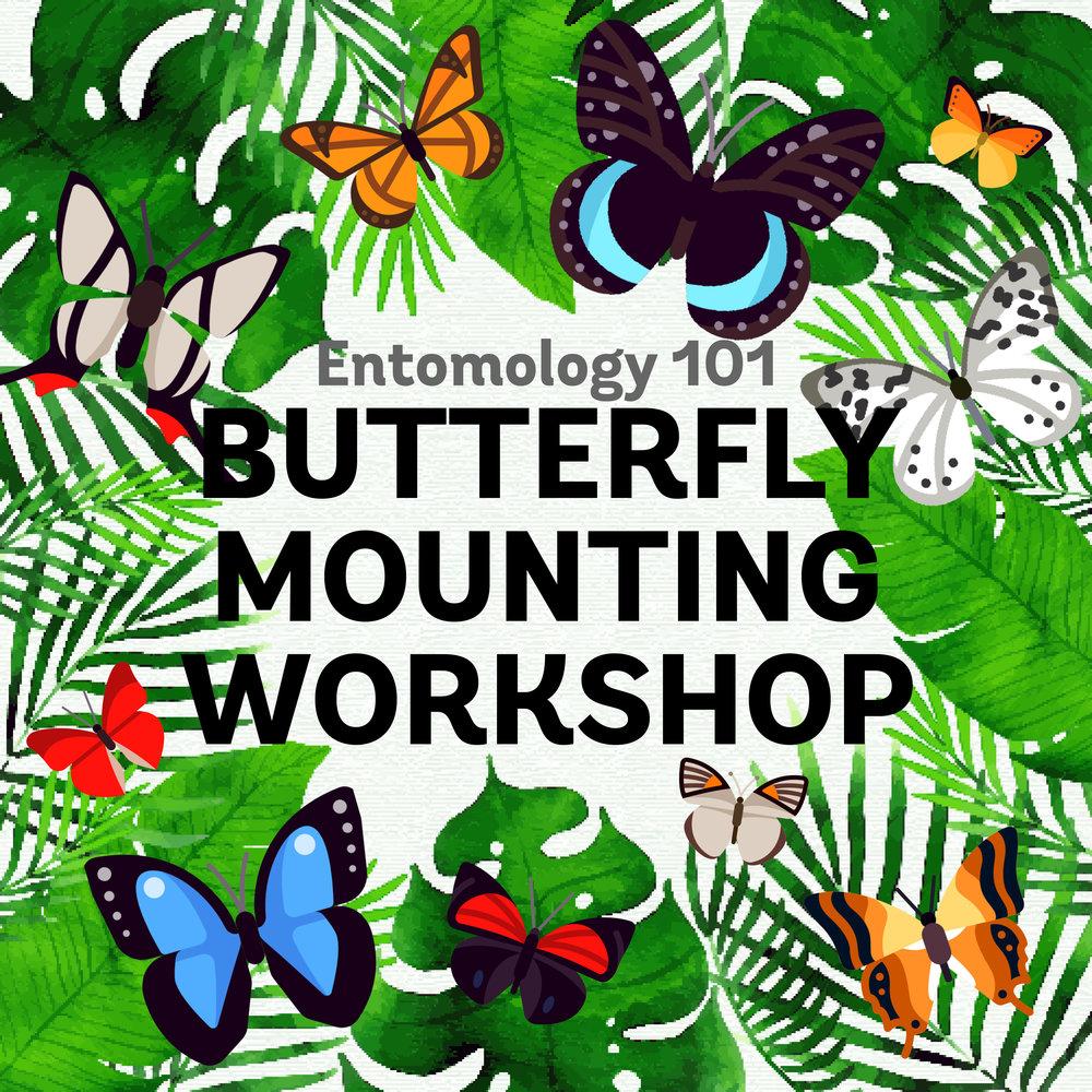 entomology_butterflies_2.jpg