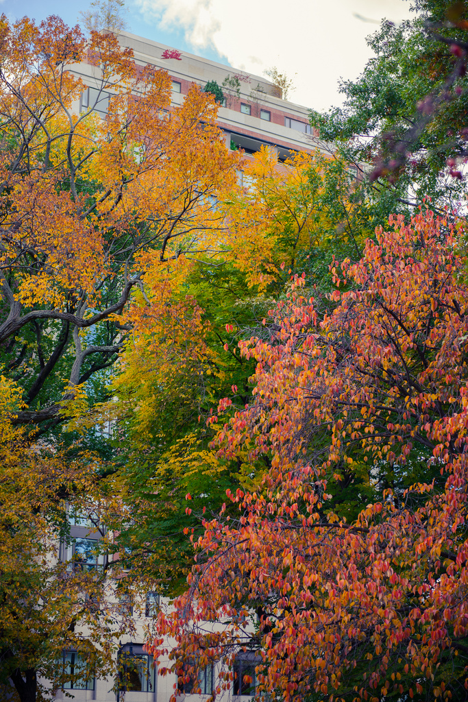 Fall colors in The Boston Garden