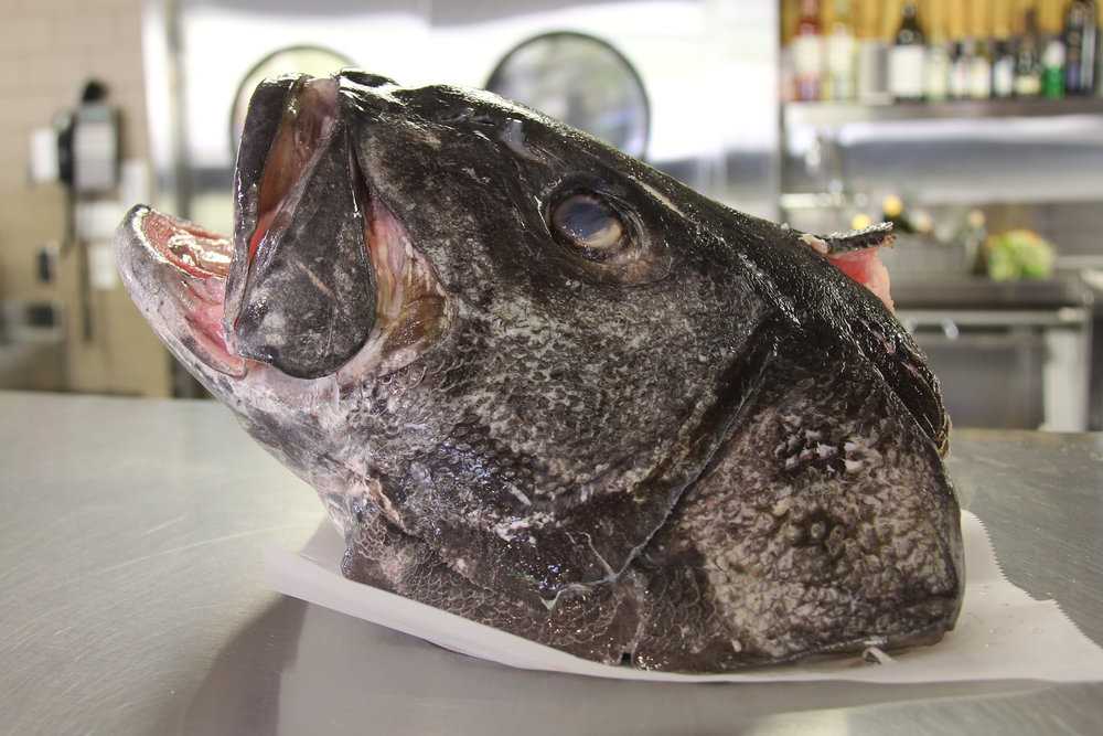 Giant Black Sea Bass, San Diego