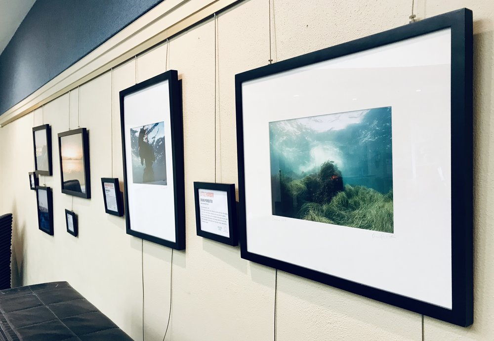 - Two pieces from Oriana's Pacific Dreamstates series are a part of the Climate Science Alliance's traveling exhibit, Art of Change. They are on display at the University Community Library through March 26, 2019.