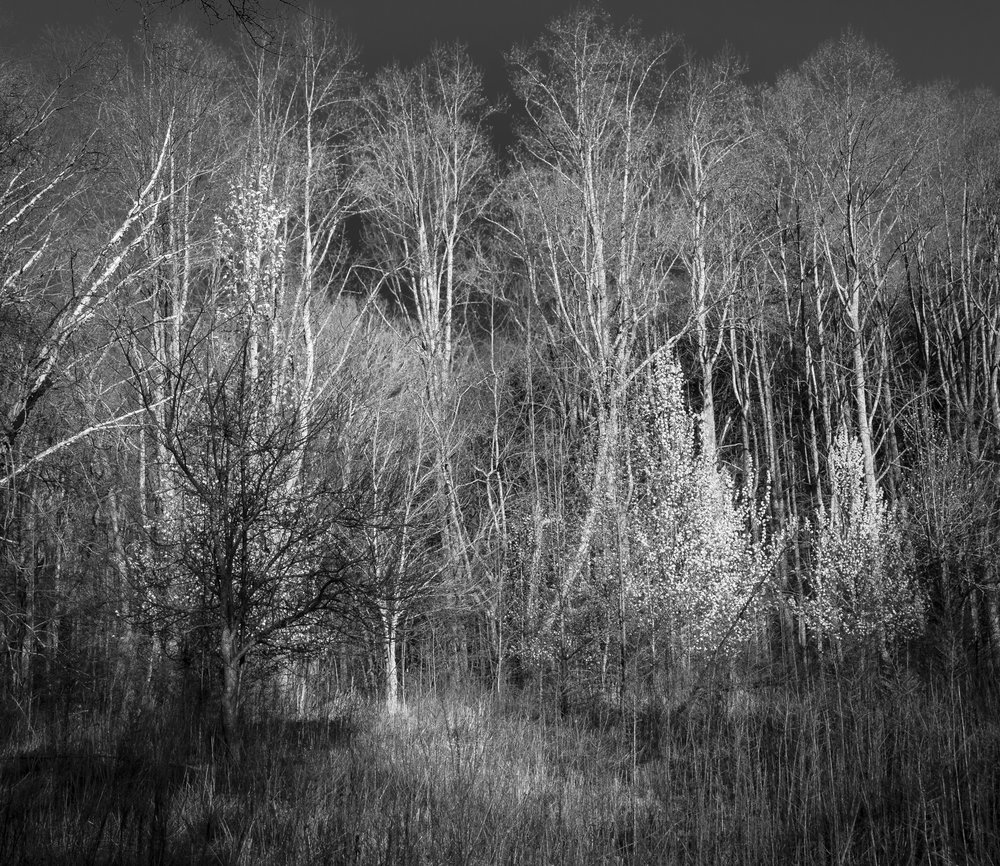 "© 2017 Mark Maio ""Late Winter/Early Spring - Coal Mountain, GA"""