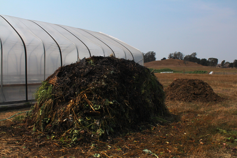 The new vegetable compost pile with an older cow manure pile in the background.