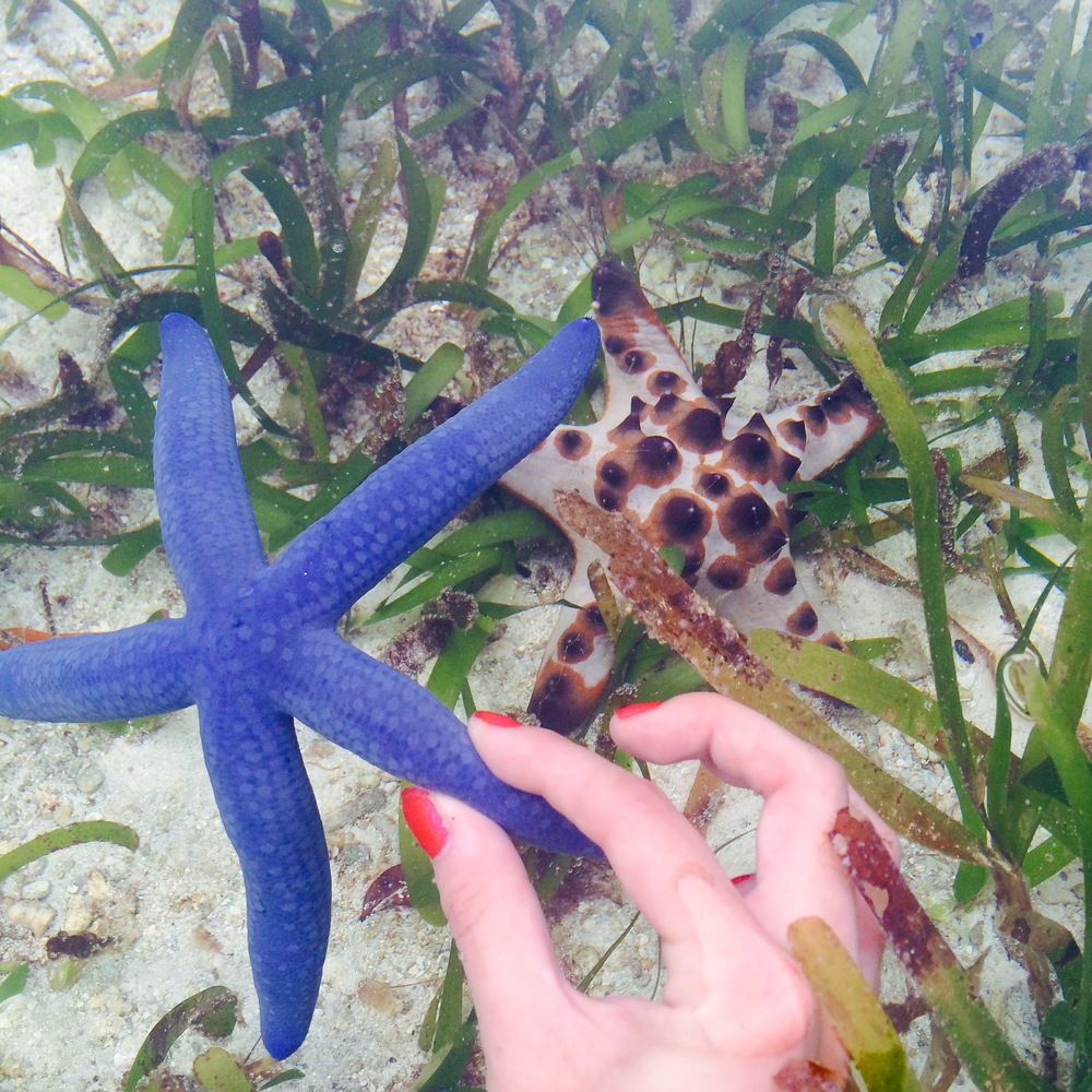 They let you touch the starfish at the Palau Aquarium. Naturally, I went to town.