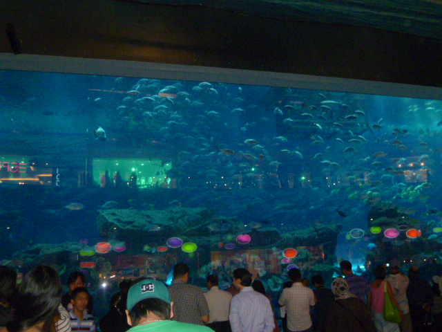 The giant aquarium in the Dubai Mall. You can pay to walk through the tunnel, something I need to do next time.