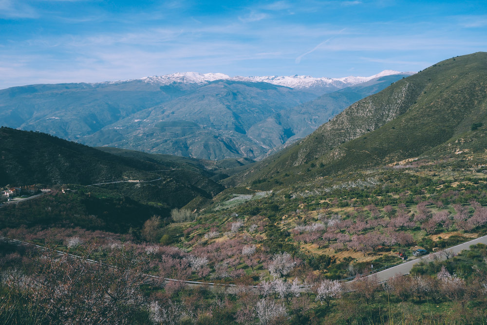 orgiva haza cycling climbs spain andalucia almond blossom spring