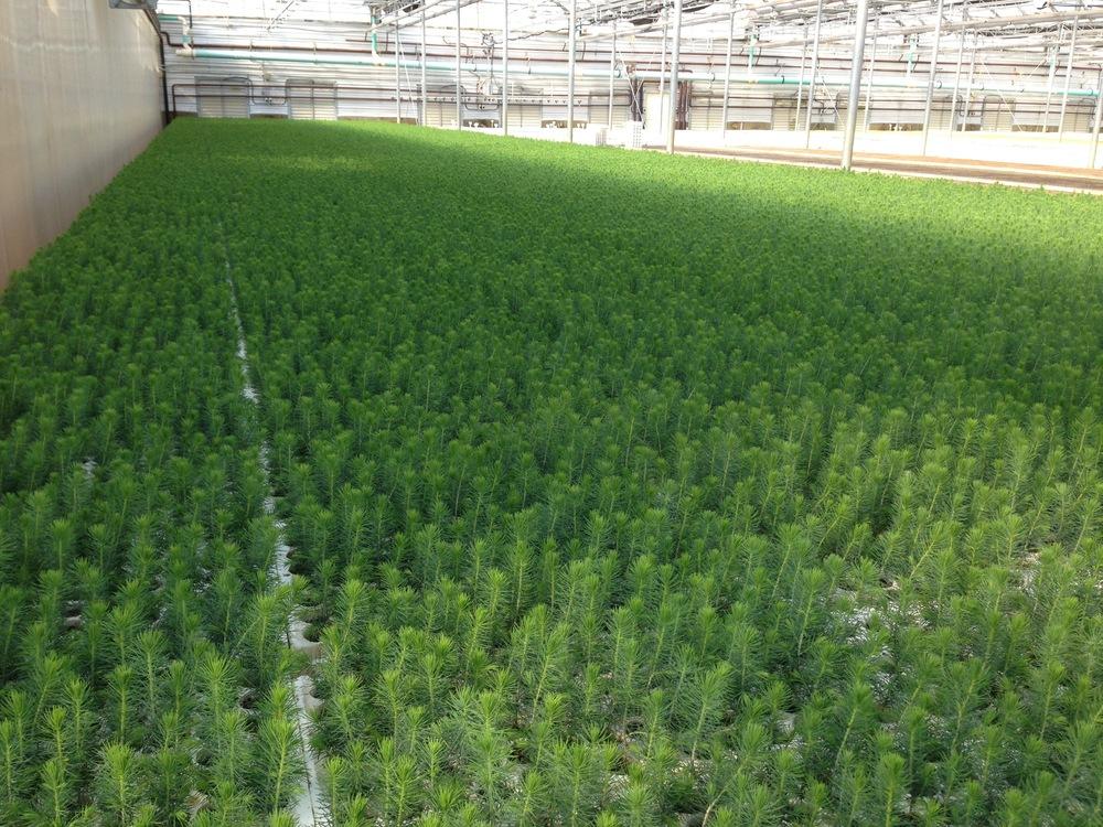 seedlings2.jpg