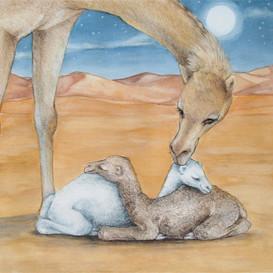 Lets_Go_To_Sleep_Little_Camels_M_Dawson.jpg_86889.jpg_c0789df430cdf30d6bf92f329fb34d98_w273_h273_cp.jpg