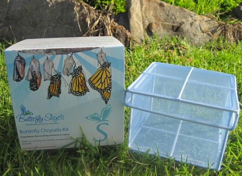 This Chrysalis Kit from Butterfly Skye's bug shop looks fascinating.