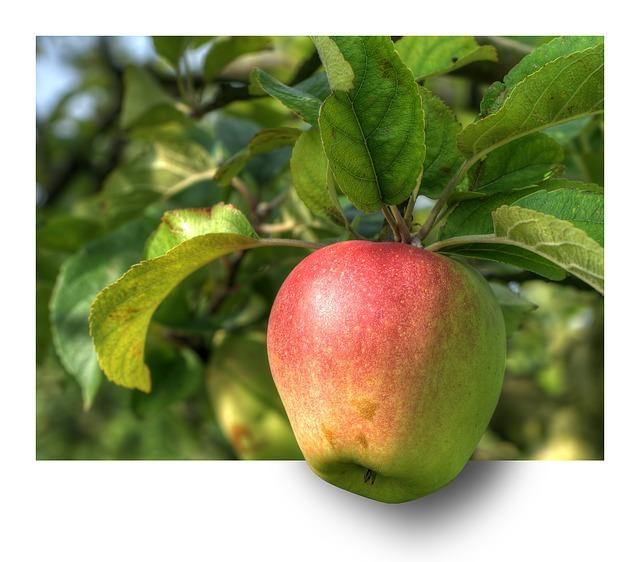 apple-191004_640.jpg