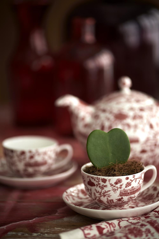 TREE red HK ceramics.jpg