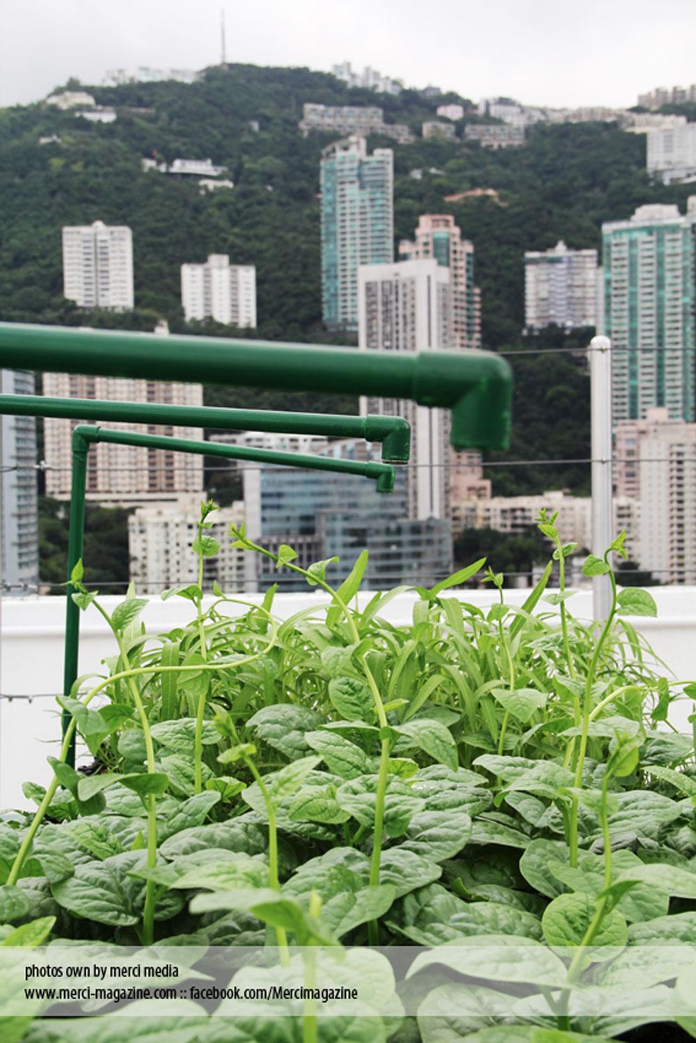 plant-3.jpg