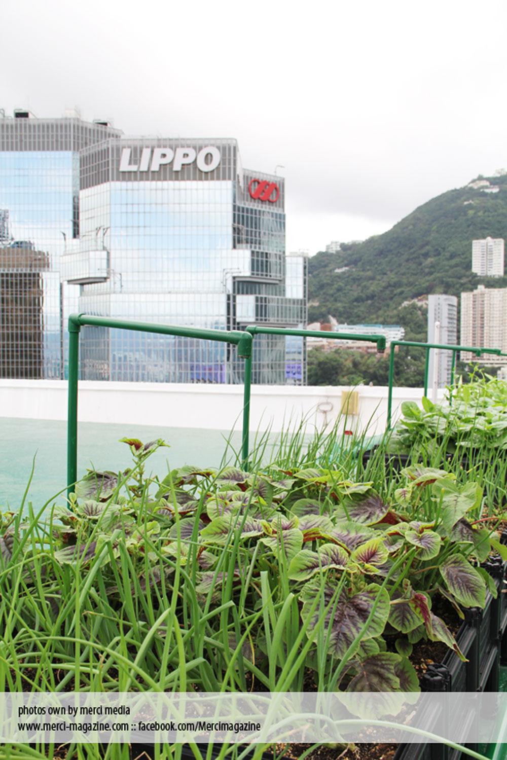 plant-5.jpg