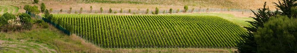 the-vineyard-1030x184.jpg