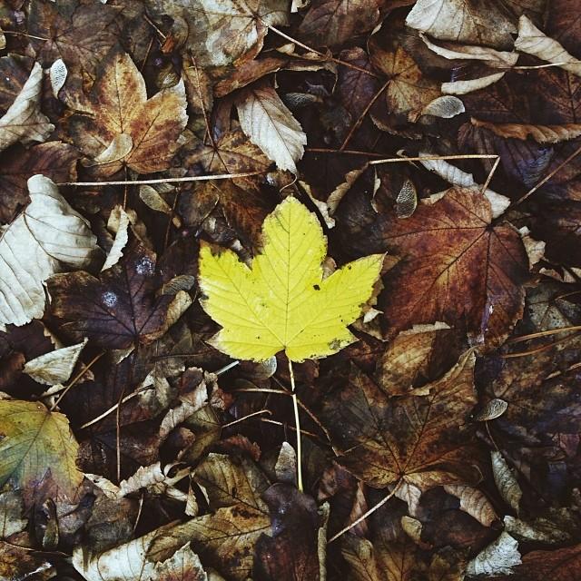 10/11/2013 •Autumn is well under way.