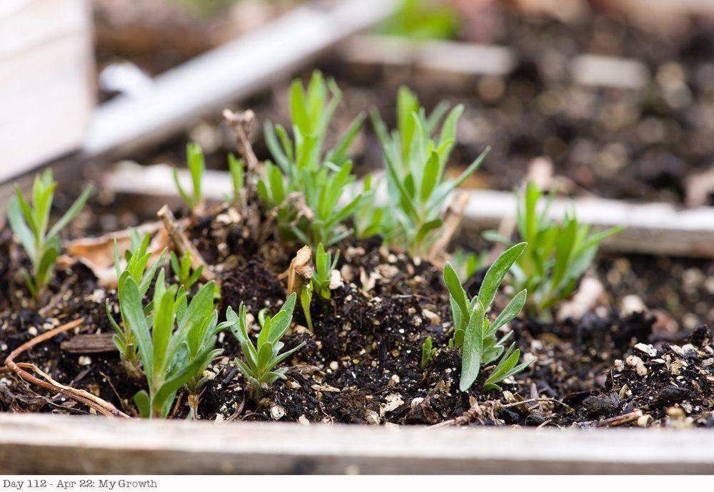Day 112 - Apr 22- My Growth.jpg