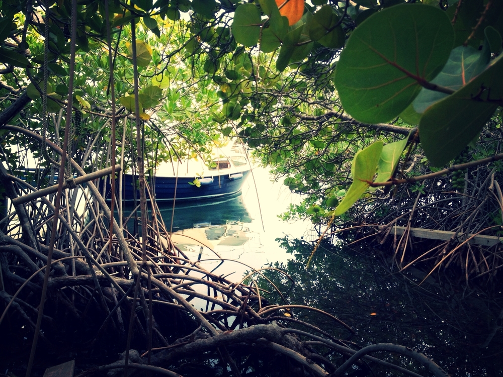 Our boat between the trees and the mangroves. Both images from my own collection.