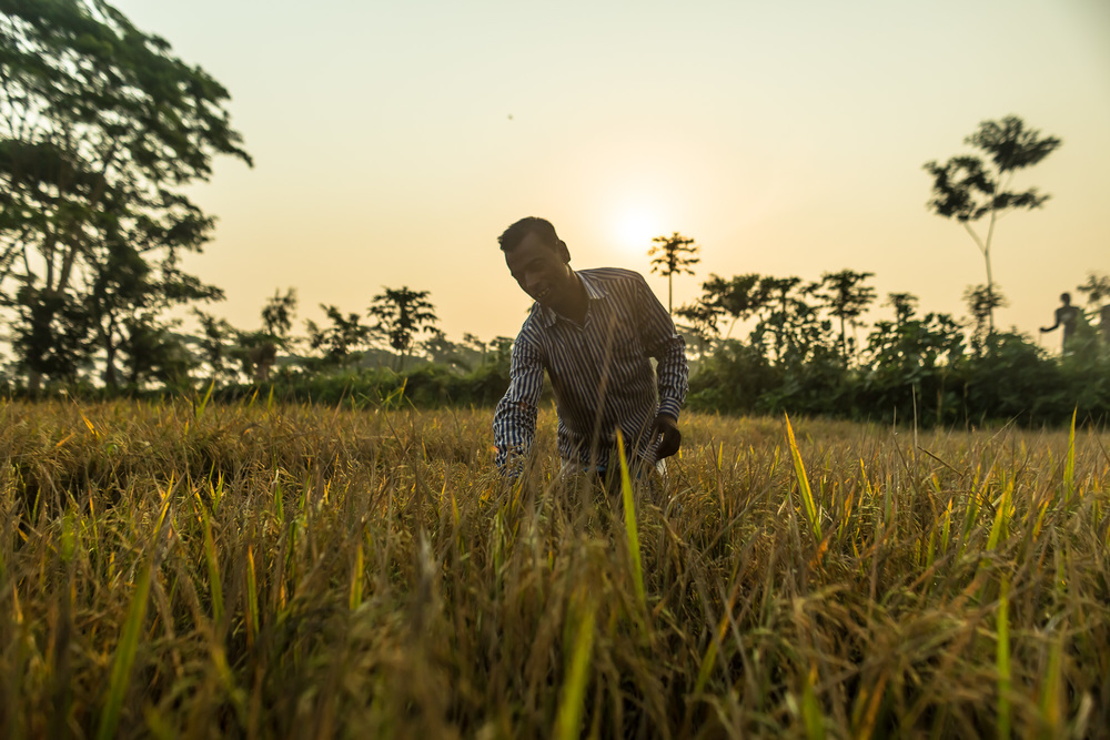 USAID programs in Bangladesh have helped 1.97 million farmers increase their production.