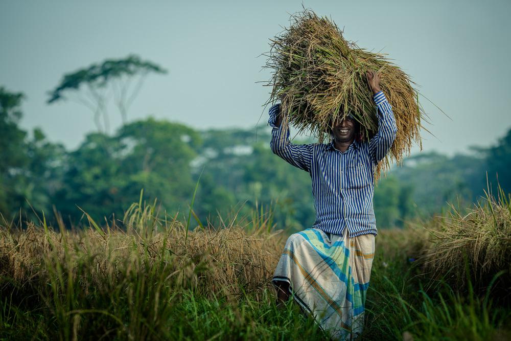 Bangladeshi farmer, Tarani Kanto Shikari (45)