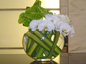 2white orchids.png