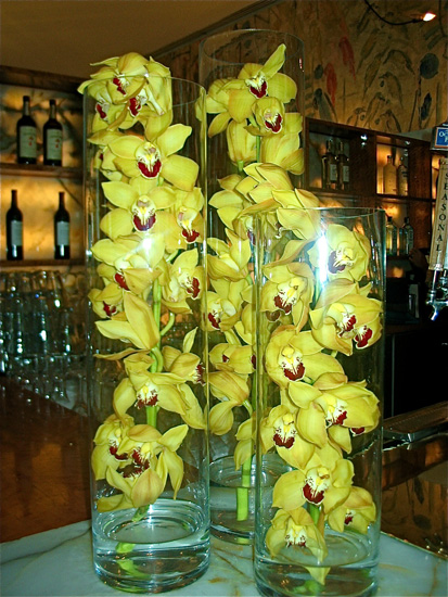 15yellow orchid.jpg