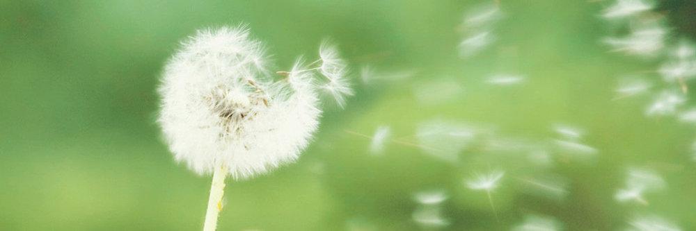 Pollen Allergy.jpg