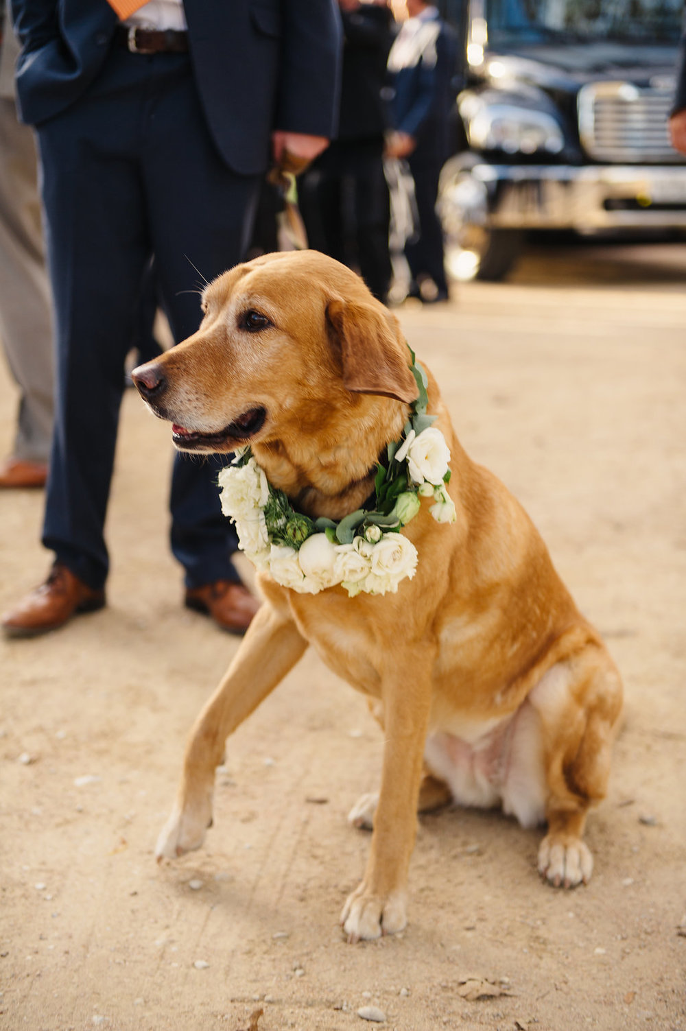 Lyons Events Wedding Dog
