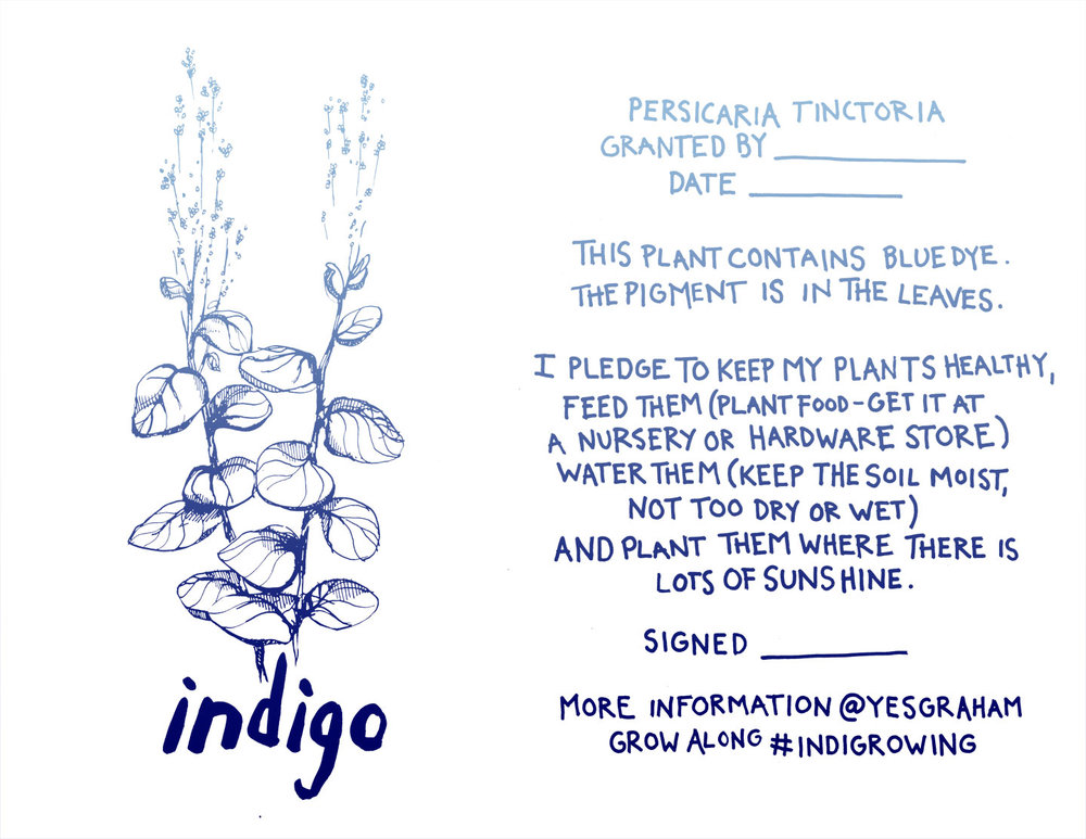 indigo seedling care pledge graham keegan