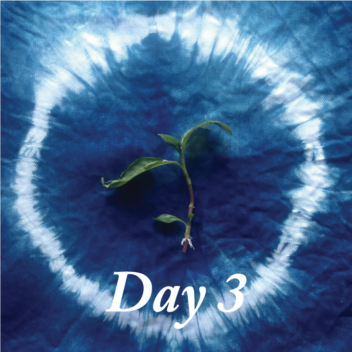 day three indigo clipping