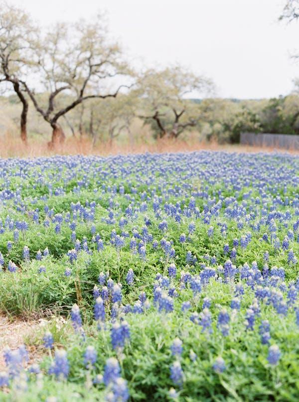 Heritage-haus-wedding-venue-austin-texas-blue-bonnets