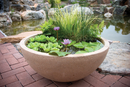 Patio ponds big impact for small spaces the pond store for Self sustaining garden with fish