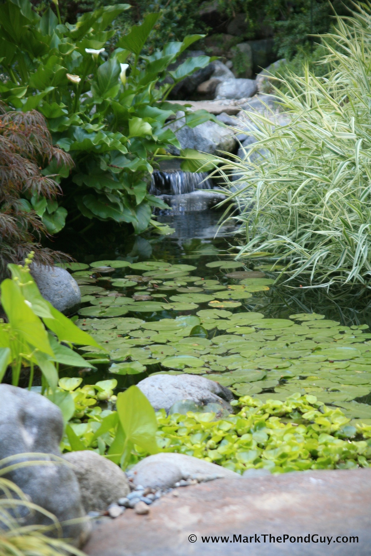 03-Pond 1 Aug 09 049.jpg