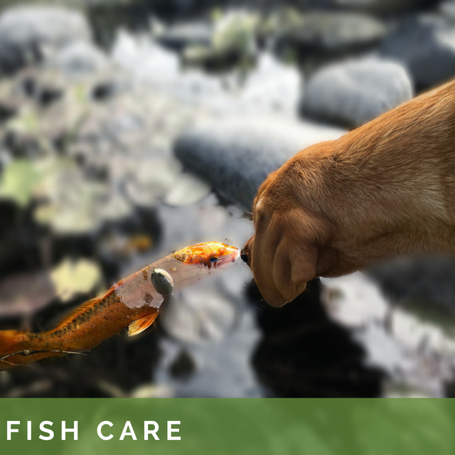 Fish Care-2.png