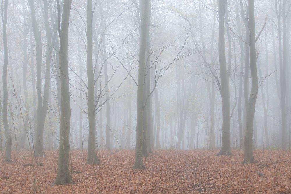 friston forest mist