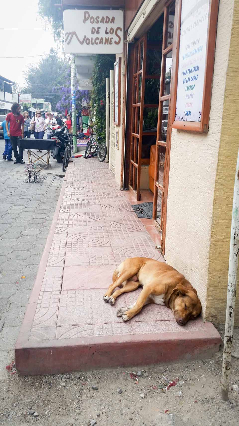 Dogs were everywhere! This one is napping outside our hotel.