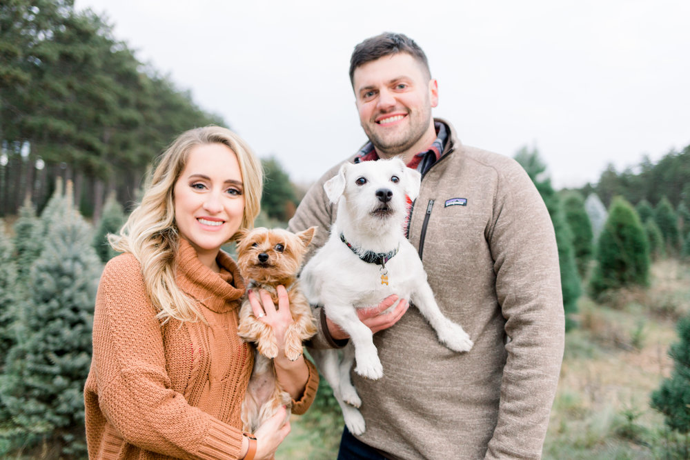 Fall Tree Farm Engagement Session with dogs by Minneapolis Wedding Photographer Chelsea Bolling