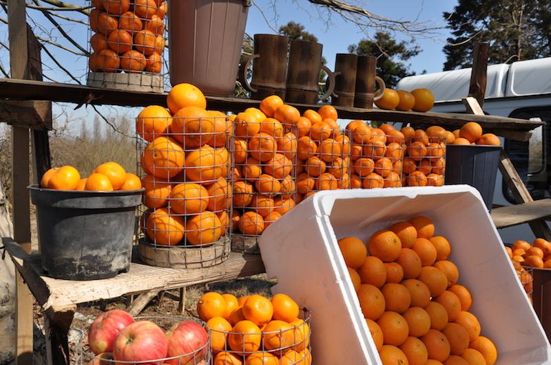 Poti, Georgia - Roadside Orange Stand