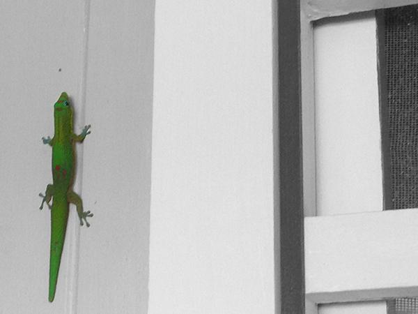 gecko-b&w.jpg